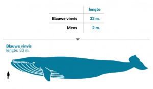 Visualiseer data in je presentatie: vergelijk de lengte van een mens met een walvis